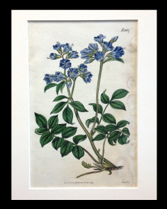 Curtis. Botanical. 1817