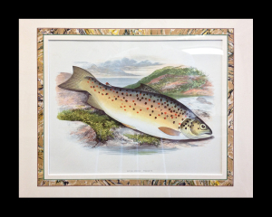 Houghton. British Freshwater Fish. 1868. French-matted 13 x 15